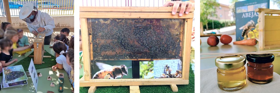 formaciones en colegios, empresas y para particulares que se quieran adentrar en el mundo de la apicultura